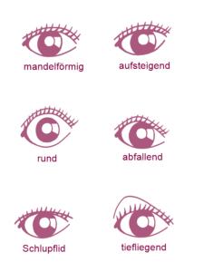 Augenformen mandelförmig aufsteigend rund abfallend schlupflid tiefliegend