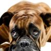 Tränensäcke wegschminken und abdecken sowie Tipps zur Verminderung von Tränensäcken